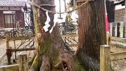 良縁の樹①
