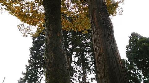 良縁の樹②