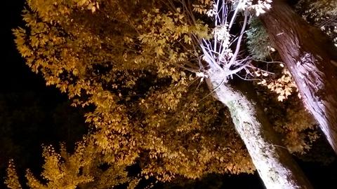 良縁の樹③