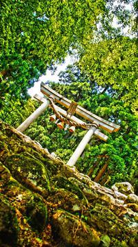 伊須流岐比古神社の鳥居