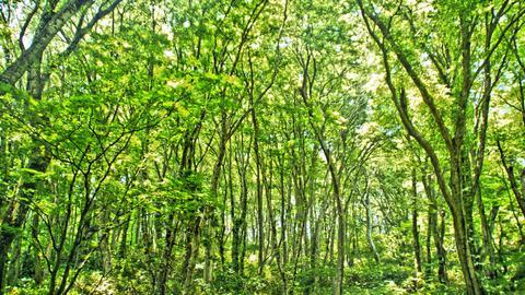 ブナ林が広がる